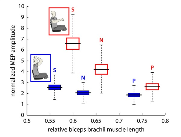 Corticomotor Excitability of Arm Muscles Modulates According to Static Position and Orientation of the Upper Limb