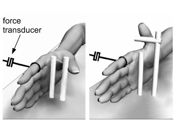 Should the Neural–mechanical Behaviour of a Muscle be Coupled or Co-vary?